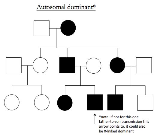 Genetics 23 Genetics In Families And The Analysis Of Mendelian Traits