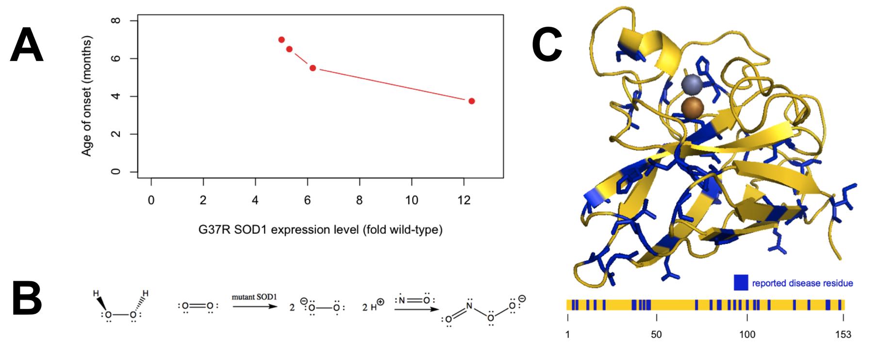 protein folding research paper Research review paper bioprocessing strategies to improve heterologous protein production in filamentous fungal fermentations liping wanga, darin ridgwaya,, tingyue gua, murray moo-youngb.